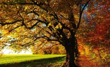 fall leaves near Atlanta