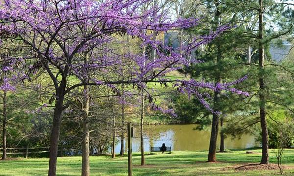 Atlanta-fall-colors
