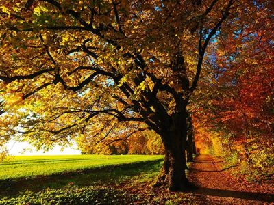 fall-leaves-near-Atlanta